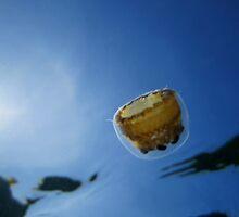 Thimble Jellyfish by diveroptic