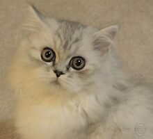 What Do You Want From Me...? by Julie Everhart
