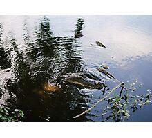 Houston Alligator Photographic Print