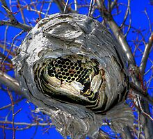 Wasp's Nest by Larry Trupp