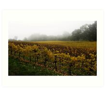 Misty Vineyard Art Print