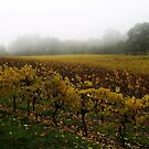 Misty Vineyard by Paula McManus