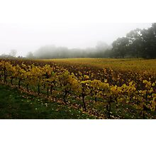 Misty Vineyard Photographic Print