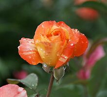 Raindrops of Perfection by Bob Spath
