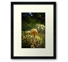 Yellow Amanita Framed Print
