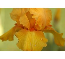 Macro of Inside of Yellow Flower Photographic Print