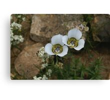 Delicate White Beauties Canvas Print