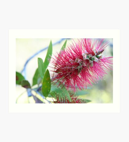 Bottle brush delight Art Print