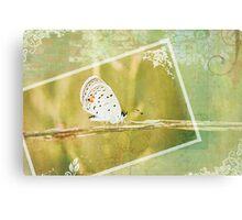 Polyommatus Icarus Canvas Print