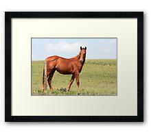 Proud Chestnut Framed Print