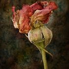 Rust n Roses ~ #13 by Rosalie Dale