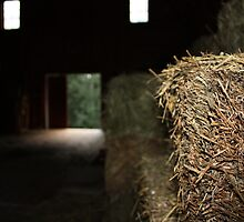 The Barn is Watching You by Alyce Taylor