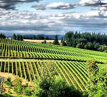 Willamette valley vinyard by Marda Bebb