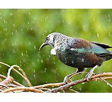 It's Raining White Fluff - Tui NZ Photographic Print
