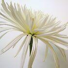 White on White by Gloria Abbey