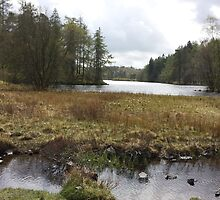 Low View Tarn Hows Lake District by loubylou2209