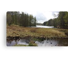 Low View Tarn Hows Lake District Canvas Print