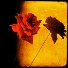 Julia's rose by Sonia de Macedo-Stewart
