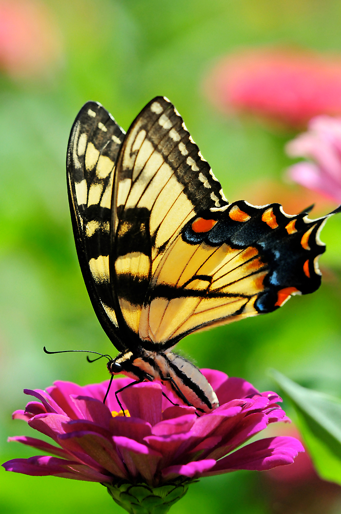 A FLOWER ROMANCE -VII-  by mc27