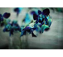Textured Orchids Photographic Print
