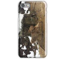 Japanese Snow Monkeys iPhone Case/Skin