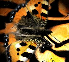 Butterfly by Niklas Aronsson