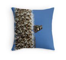 Butterfly & Blackboy Throw Pillow