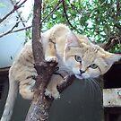 Raw Cat by supernan