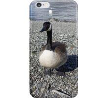 Windermere Canadian Goose iPhone Case/Skin