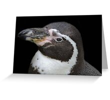 Humbolt Penguin Portrait (Cotswold) Greeting Card