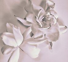 Sweet Gardenias by suzannem73