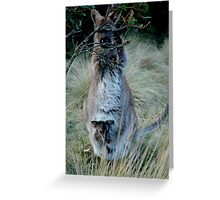 Wallaby with joey Greeting Card