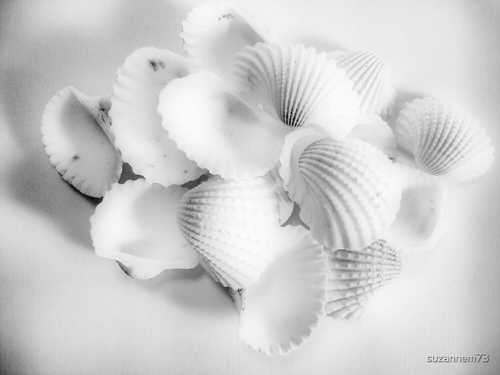 White Cockles by suzannem73