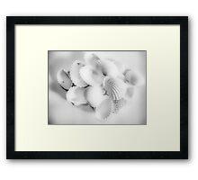 White Cockles Framed Print