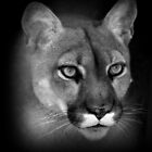 Cougar by Sandy Keeton