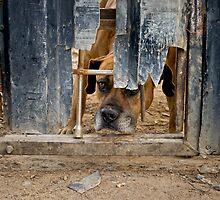 Junk Yard Dog by Umbra101