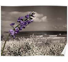 Wild Flower,Hut Gully,Great Ocean Road,Australia. Poster