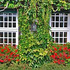 Ivy, geraniums and 2 windows........ by Adri  Padmos