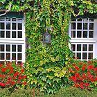 Ivy, geraniums and 2 windows........ by Adri  Padmos