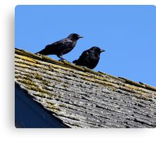 Two Crows on a Hot Lichened Roof Canvas Print
