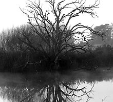 """""""Blackstone Tree"""" B@W by Husky"""