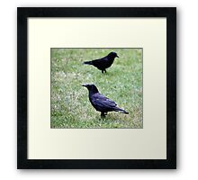 Two Crows Passing in the Day Framed Print