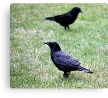 Two Crows Passing in the Day Canvas Print