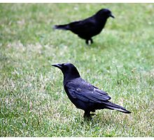 Two Crows Passing in the Day Photographic Print