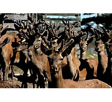 Field of Antlers Photographic Print