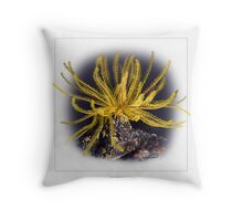 FEATHER STAR 1 Throw Pillow