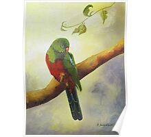 King Parrot,  Killarney country Qld Australia. Poster