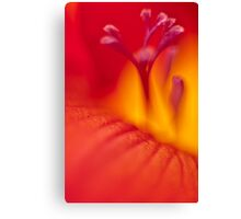 Freesia abstract Canvas Print