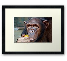 Chimp Mother Framed Print