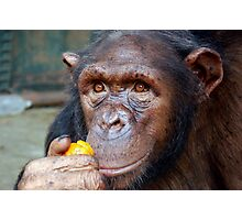 Chimp Mother Photographic Print
